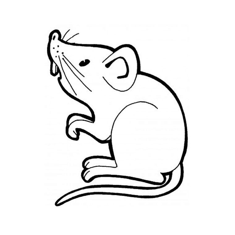 Dessin de rat facile